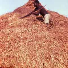 Thatching a New Roof