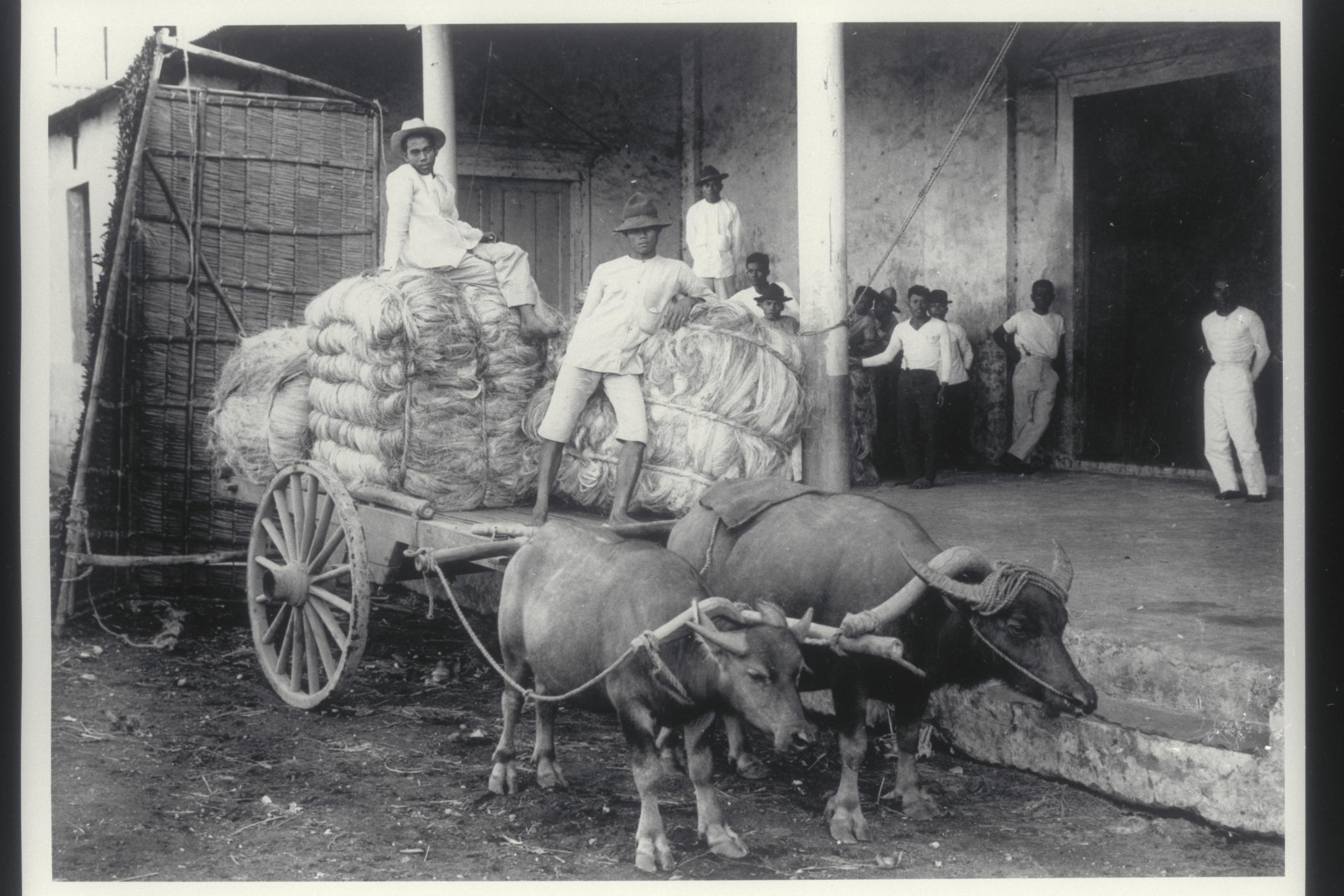 Hemp being unloaded at a storehouse, Legaspi, Albay, 1910-1912