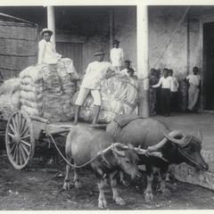 Hemp being unloaded at a storehouse, Legaspi, Albay, 1910-1912