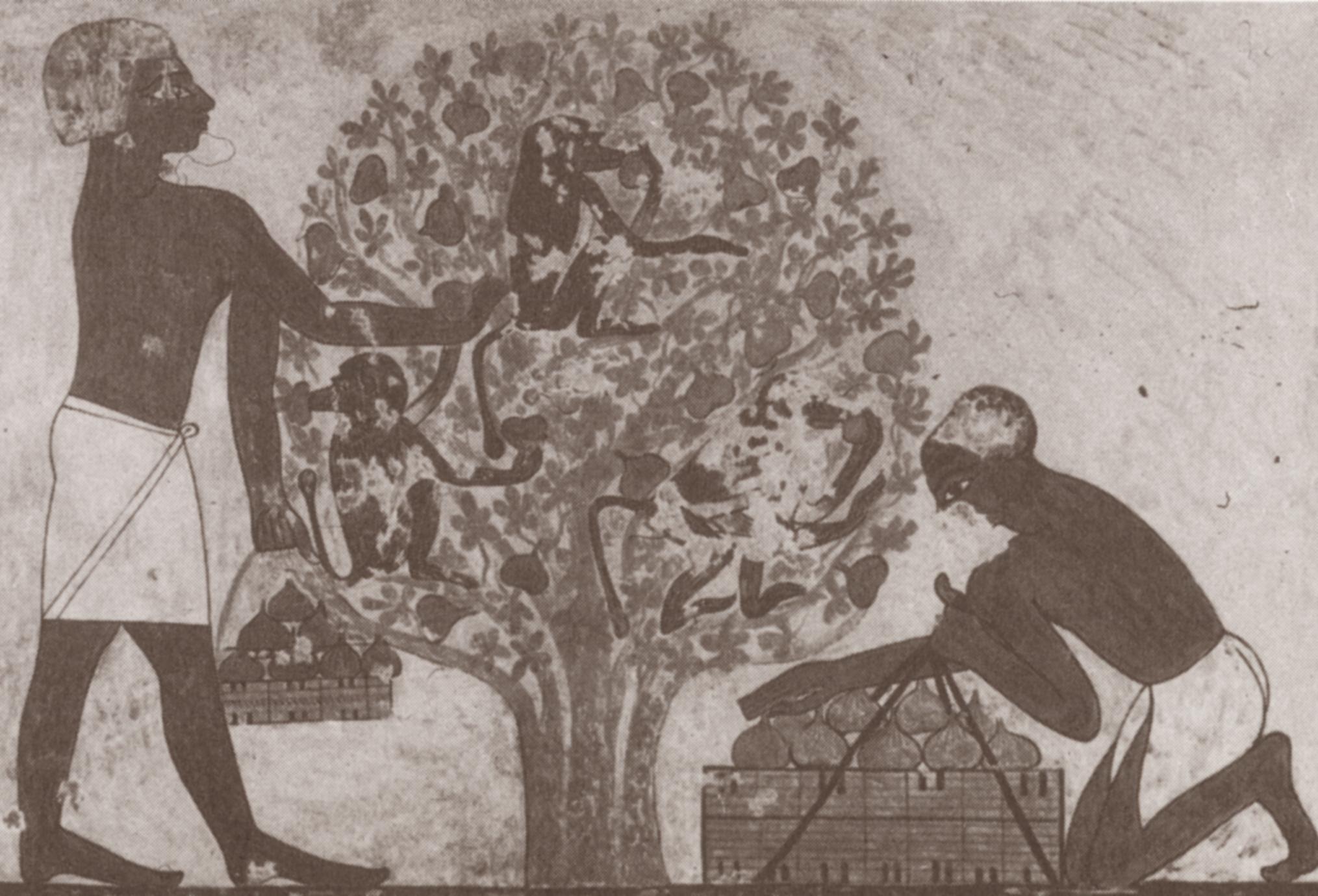 Men Gathering Figs