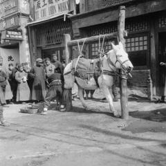 People watching a horseshoe mender working on the street.