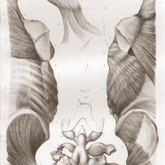 Orangutan Anatomy Print