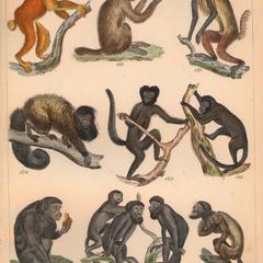 New World Monkey Group Print