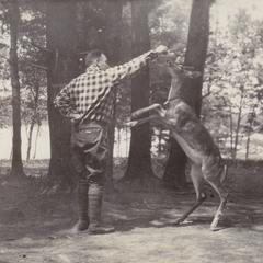 Dancing deer at Connors Lake hotel