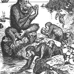 Oyster-Eating Orangutan Print