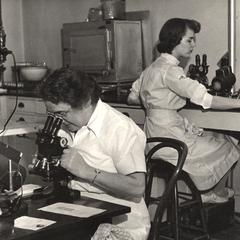 Working at microscopes