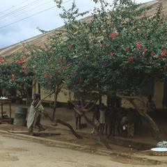 Yeyedole's house
