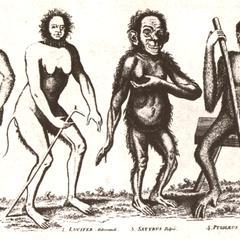 Anthropoid Creatures