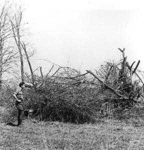 Starker Leopold making brush shelter for rabbit habitat