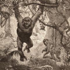 Arboreal Gorillas Print