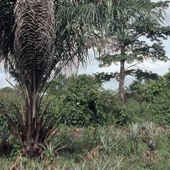 Plants on Oba Oladele Olashore's farm