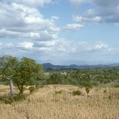 Ceiba tree in corn field at Asunción Mita