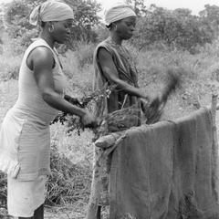 Women Stripping Harvested Peanuts from Plants