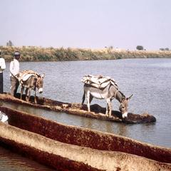 A Dug-Out Canoe Functioning as a Ferry on the Zaria River