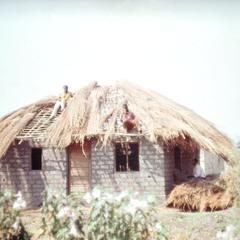 Thatching Roof on a New House in Kaputa Area