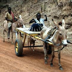 Rider on Donkey Following Donkey Pulling a Cart