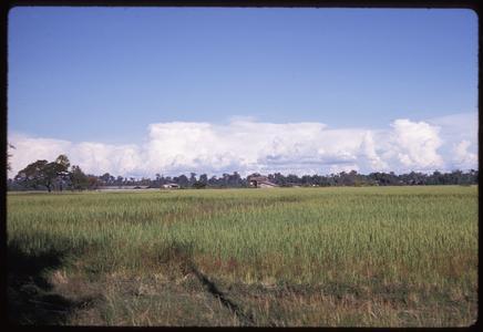 Ban Pha Khao : fields