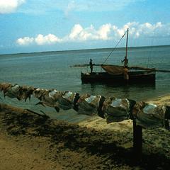 Fishing Boat and Fish Drying on Line on Zanzibar
