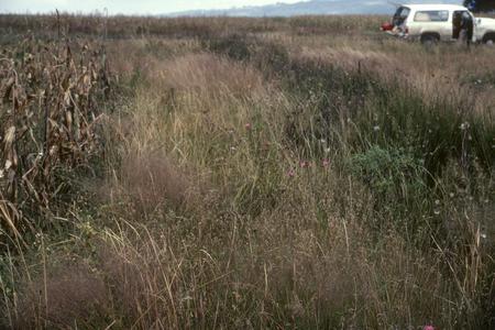 Strip of prairie between corn fields, west of Toluca