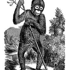 Standing Orangutan Print