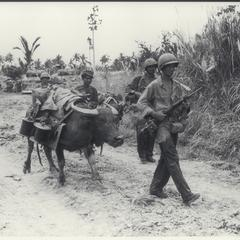 American soldiers and native boy bring equipment by means of a water buffalo, Leyte, 1944