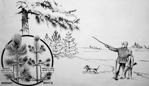 Man, boy with gun, and dog in winter, with close-up insert of red and white pines
