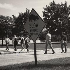 Wombats crossing
