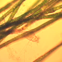Rotifer movie