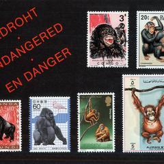 Hominidae Stamps