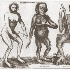 Anthromorpha according to Emmanuel Hoppius