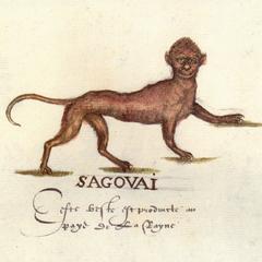 Old World Monkey Illustration