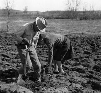 Aldo and Estella Bergere Leopold planting pines