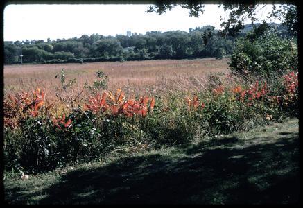Fall view of sumac and prairie, Grady Tract, University of Wisconsin Arboretum