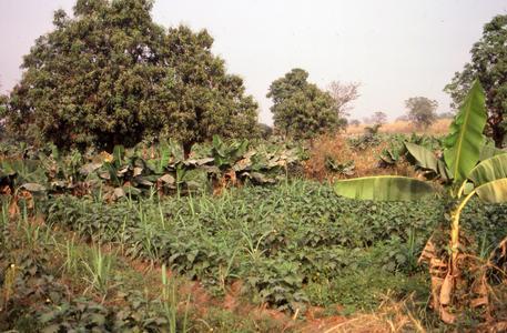 Farming in Bida