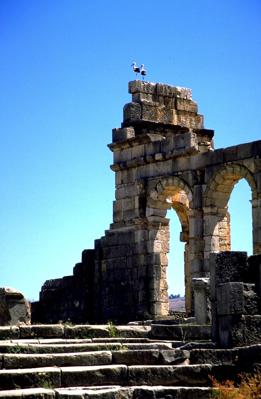 Volubilis Roman Ruins with Storks at a Distance