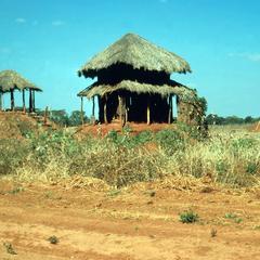 Towers in Sorghum Field