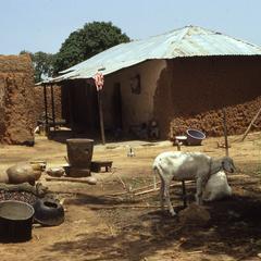 Goats in Zaria