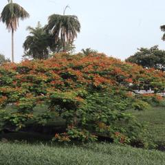 Flowers on Obafemi Awolowo University campus