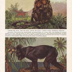 Japanese Macaque and Celebes Crested Macaque Print