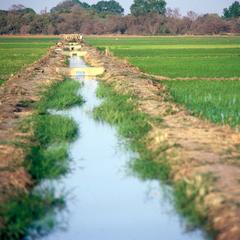 Rice Fields and Canal in the Jahally/Pacharr Project