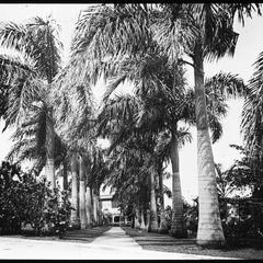 Palm walk at Titchfield Hotel