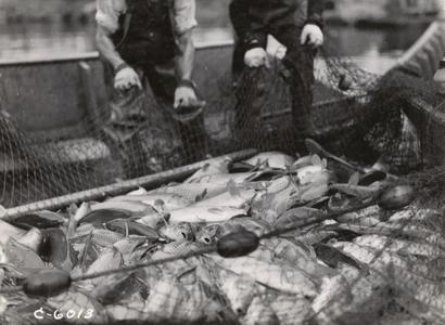 Rough fish control