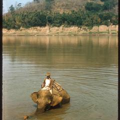 Elephant in river to haul logs
