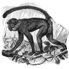 Mona Monkey Print