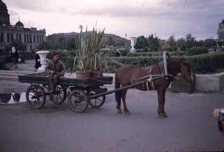 Man sitting on a horse-drawn wagon