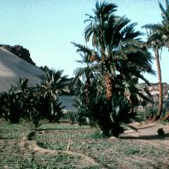 Desert and Agricultural Land Meeting in an Area in Northern Sudan