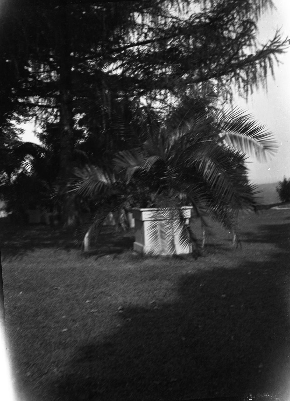 Fern in yard at Burlington home