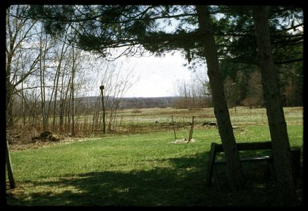 View of pines, restored prairie, and a Leopold bench from the Leopold shack