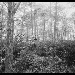 Foliage in spring - Jacob's Island