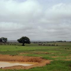 Animals Grazing in Jos